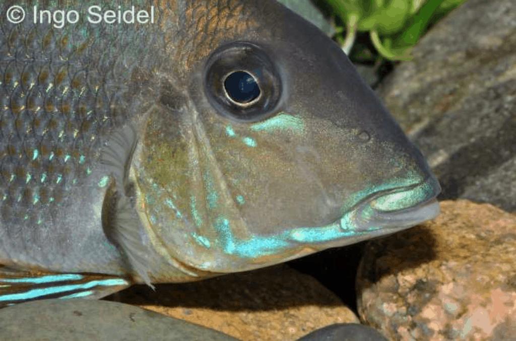 Foto: aqua-global - Dr. Jander & Co. OHG