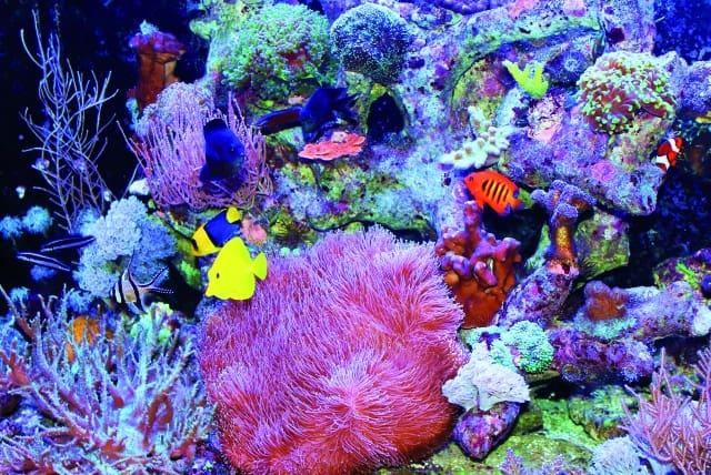 Tageslichtphase mit Mischbesatz aus Stein- und Weichkorallen sowie einer schönen Fischgruppe. Foto: Daniel Heerz