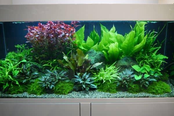 Aquascaping - Unterwasserg?rtnern auf kleinstem Raum - my-fish