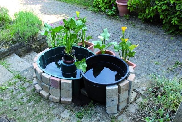 Solche Gefäße eignen sich hervorragend für die Guppy-Haltung im Garten. Foto: Hubert F. Bollig
