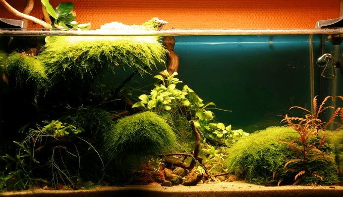 tropica_28
