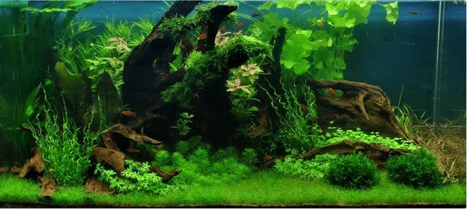 tropica_35