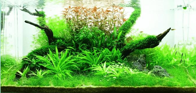tropica_45