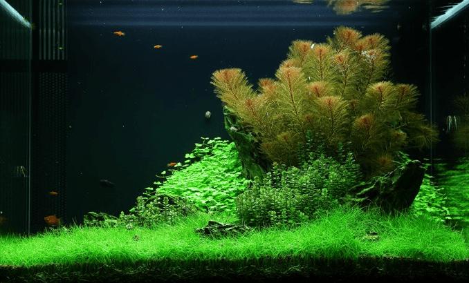 tropica_49