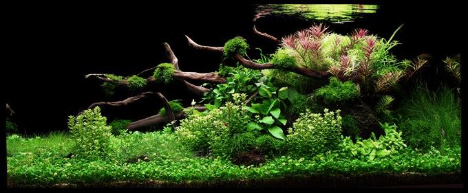 tropica_78