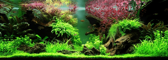 Layout 80 my fish for Aquarium hintergrund ausdrucken