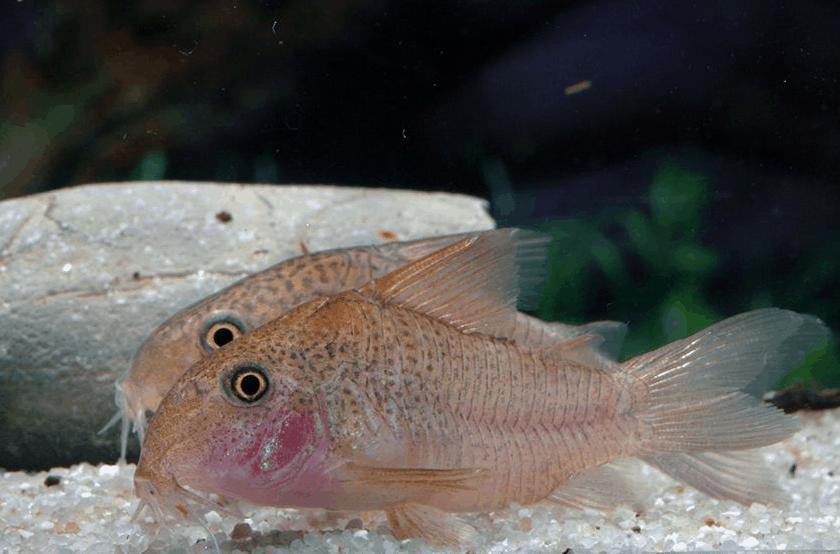 Foto: Aquarium Glaser