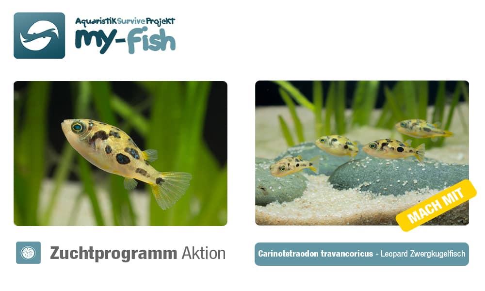 2. Zuchtaktion im my-fish Zuchtprogramm