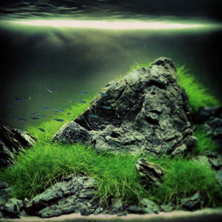 Foto: Aquascaping Symphony