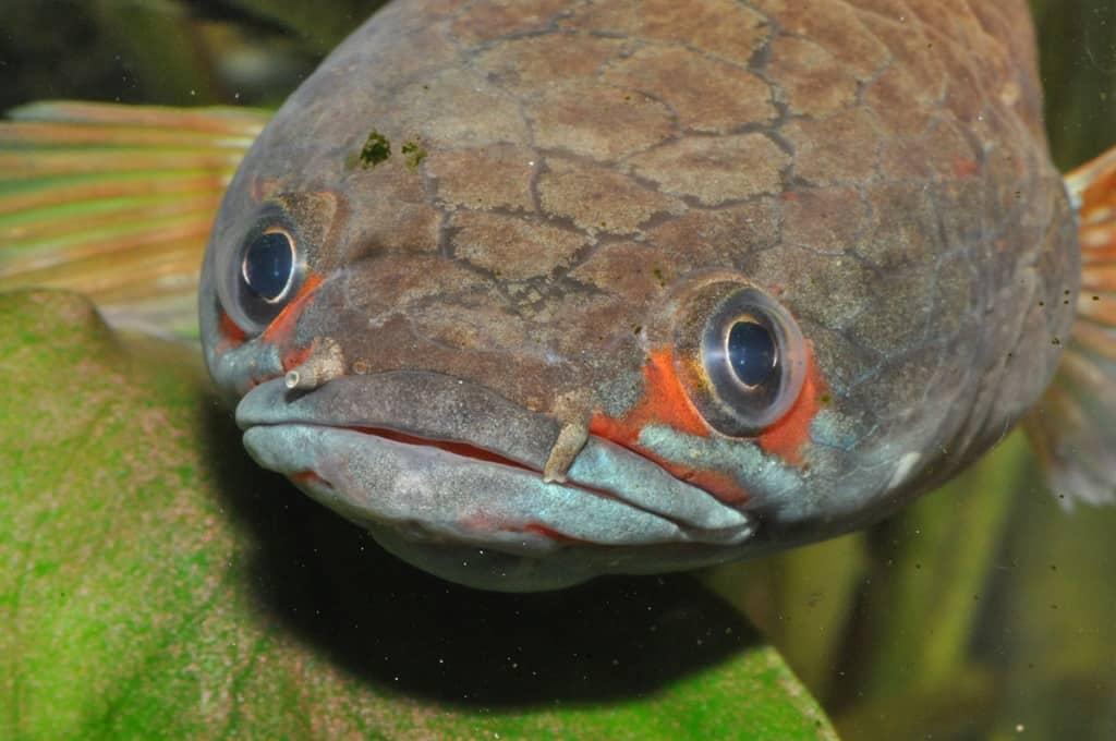 Der faszinierende Körperbau der Fische 8