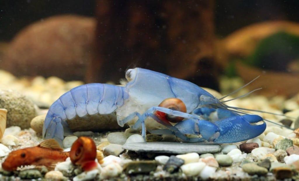 buchvorstellung flusskrebs aquarium f r einsteiger my fish. Black Bedroom Furniture Sets. Home Design Ideas