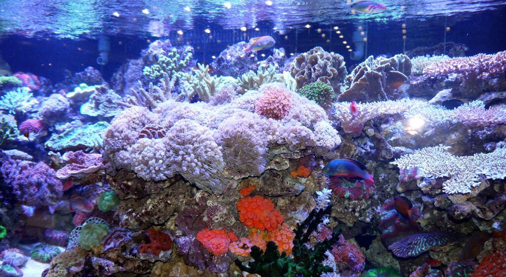 Foto: FLH. - Auch Arbeitsplätze werden durch hochwertige Aquaristik enorm aufgewertet.