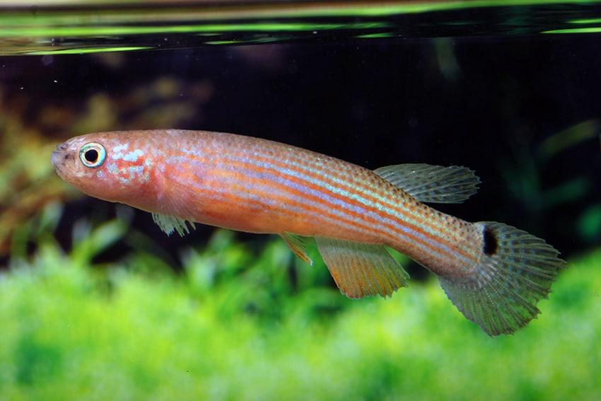 Verbreitungskarte und Fischentwicklung in der Erdgeschichte 10