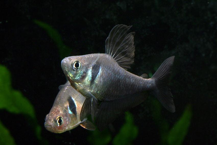 Foto: Aquarium Glaser - Frank Schäfer