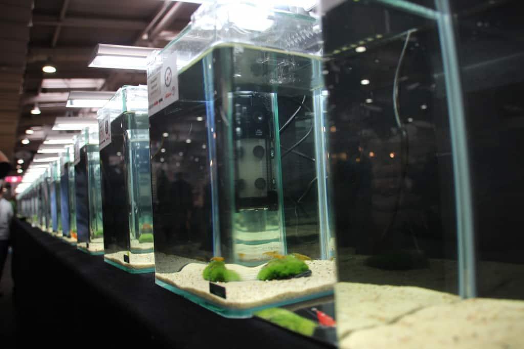 Aquarien über Aquarien beim Garnelenchampionat