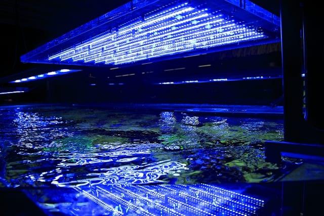 LED-Aquarienleuchten sind längst Standard. Rainer Stawikowski