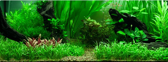 Layout 89 my fish for Aquarium hintergrund ausdrucken