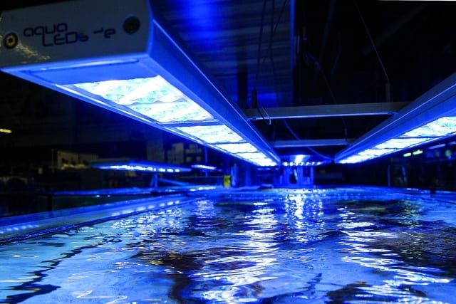 Foto: LED-Lampen sind aus der Aquaristik nicht mehr wegzudenken. Rainer Stawikowski