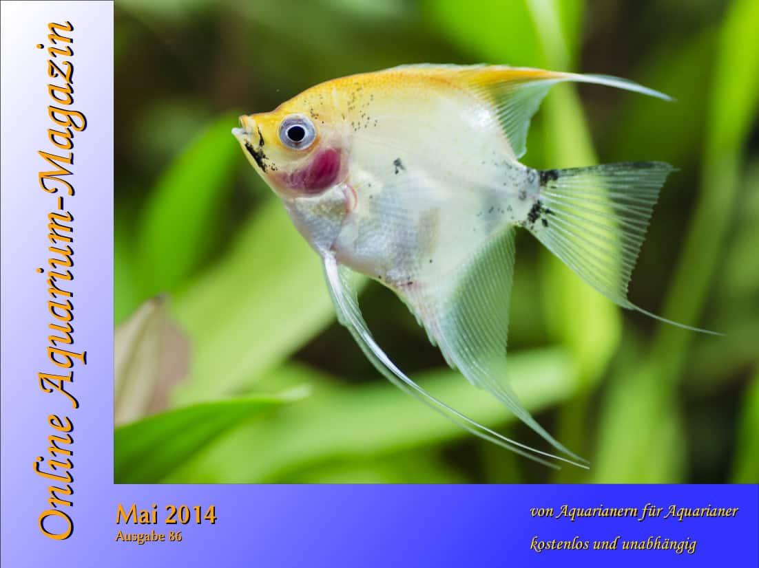 Quelle: Online Aquarium Magazin