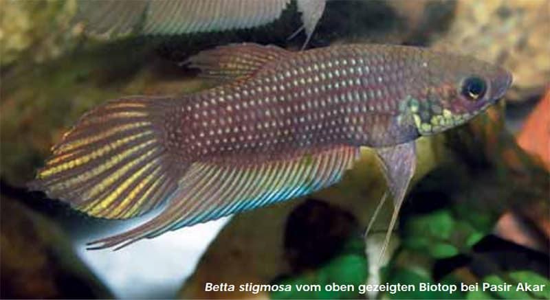 Quelle: Aquaristik Fachmagazin