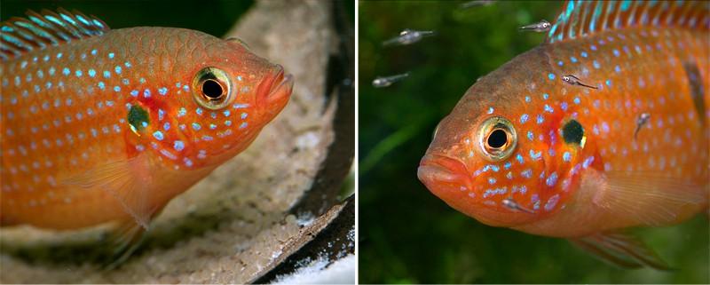 Waldemar Fischer // biotop-aquaristik.blogspot.de