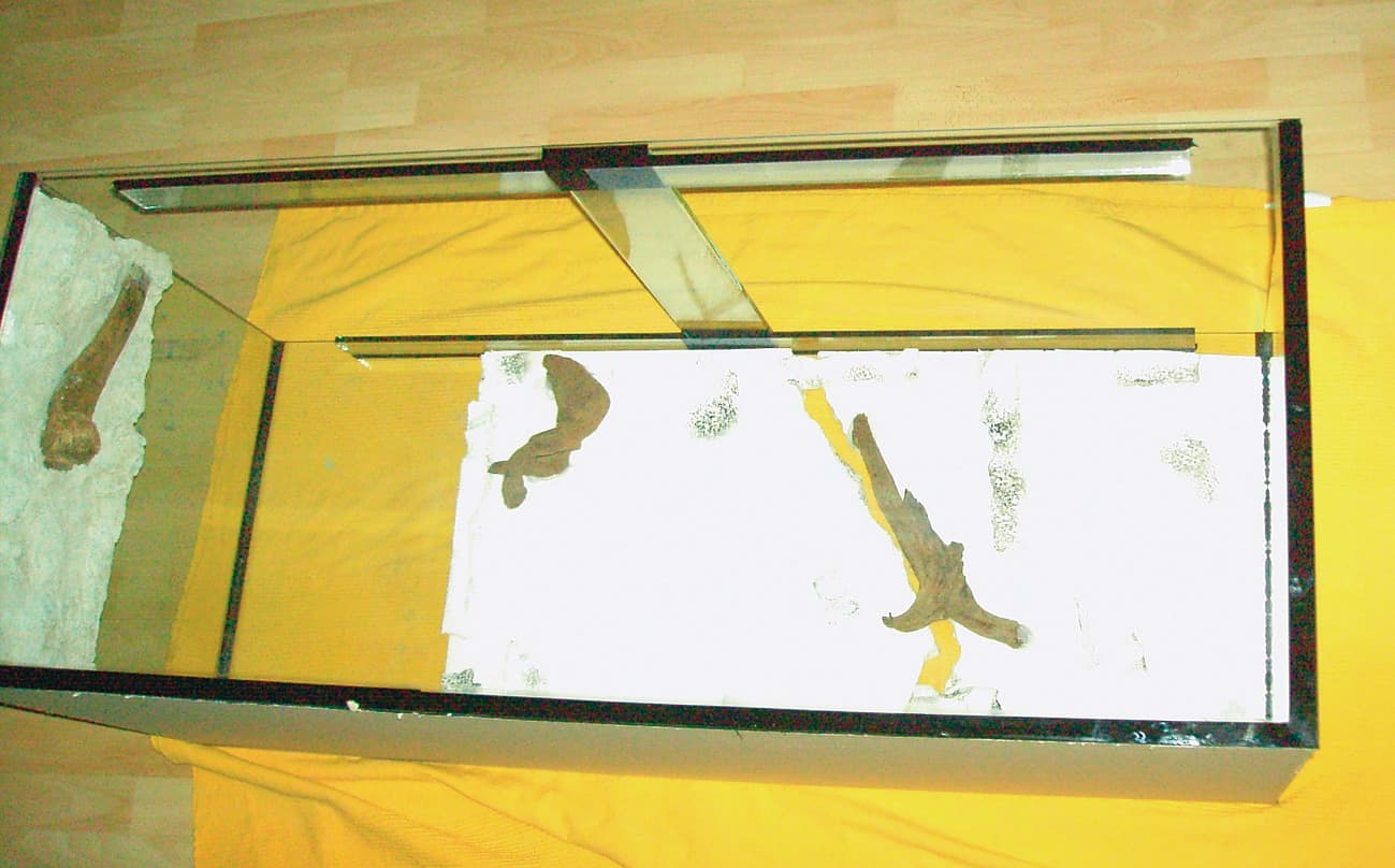 3-D Rückwand einer Uferlandschaftsunterwasser-Nachbildung 5