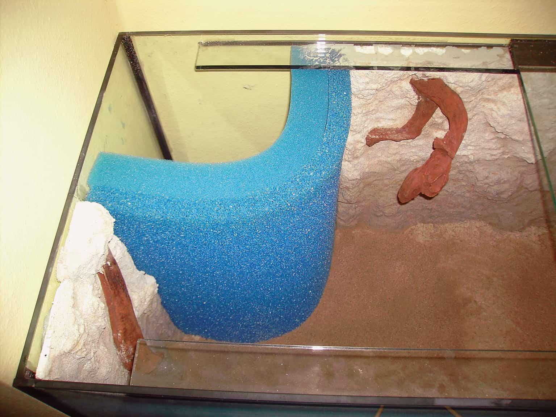 """Der Hamburger Mattenfilter als attraktive Eck-Variante, die Seiten der Schaumstoffmatten werden von der linken Seitenwand und von der Rückwand gehalten. Wichtig ist dass die Schaumstoffmatten gut mit dem Aquariumboden abschließen und auch links und rechts an den """"Haltewänden"""" gut anliegen. Die blaue Farbe des Filterschaumstoffs ändert sich durch natürliche Filterprozesse im Aquarium in den nächsten Wochen zu anthrazitgrün bis graubraun und fällt somit nicht mehr störend ins Auge. Foto: © Michael J. Schönefeld"""