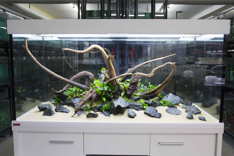 Schulungen im zierfischgro handel my fish for Gartenteichfische arten