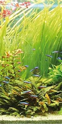 gesundes Pflanzen, gesundes Wasser = gesunde Fische. Bildquelle: JBL