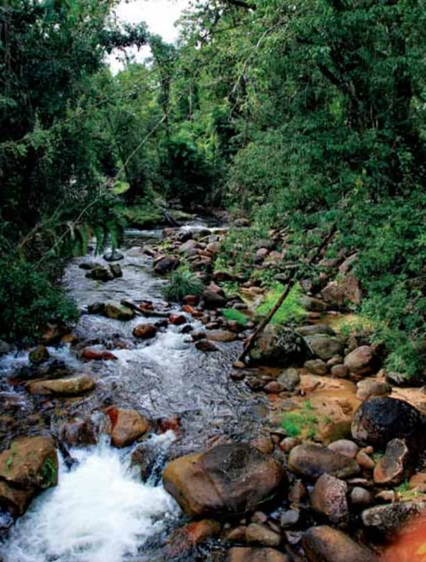 Habitat der Zebragarnele. Quelle: AF 235