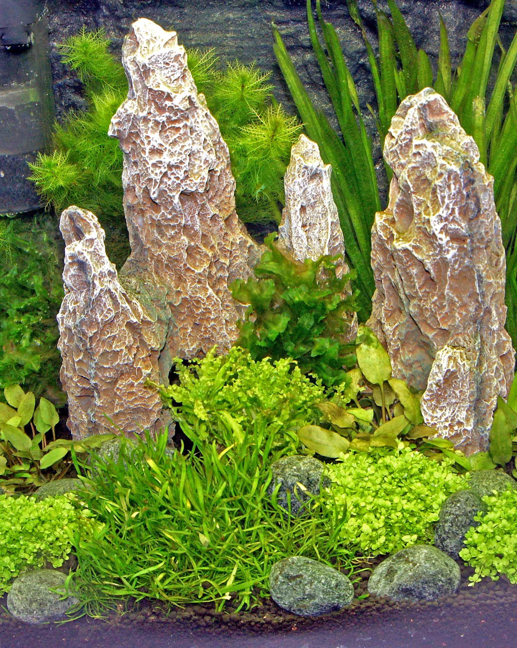 Foto: FLH. - Wachsen die Wasserpflanzen gesund und ¸üppig, gibt es auch weniger Algenprobleme.