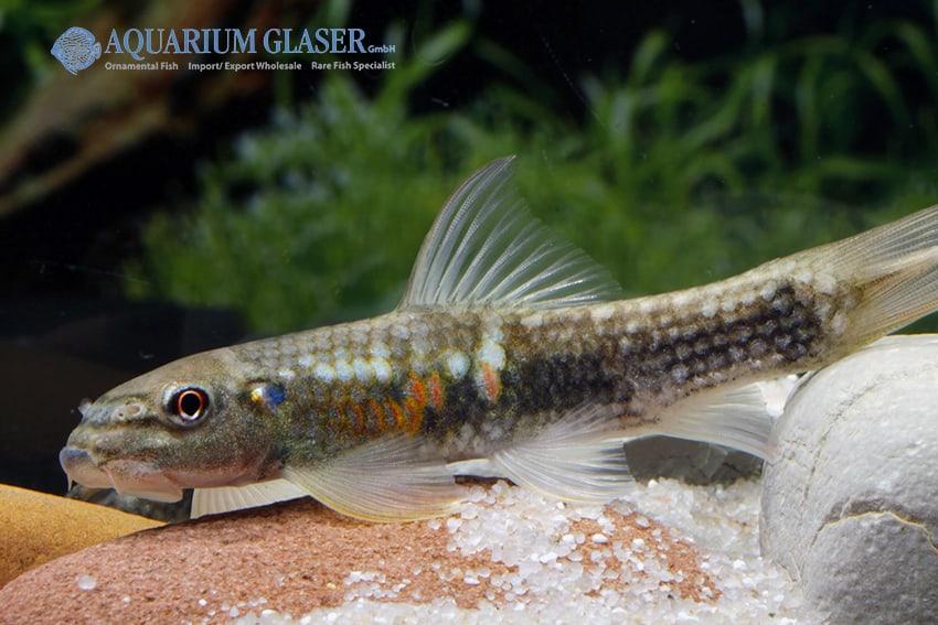 Der faszinierende Körperbau der Fische 4