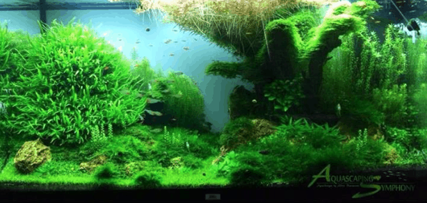 Aquascaping Tipps 6