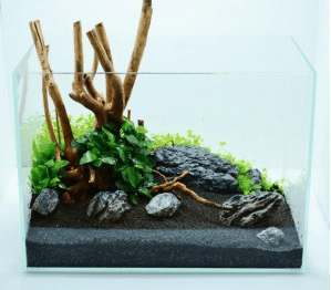 Aquascaping Tipps 11