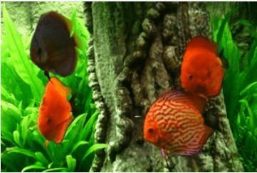 erfolg mit ihrem aquarium9 my fish. Black Bedroom Furniture Sets. Home Design Ideas