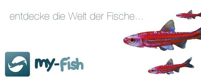 Werbebanner von my-fish 5