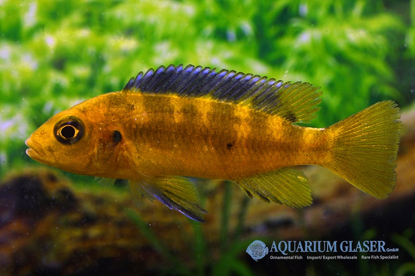 Quelle: Aquarium Glaser