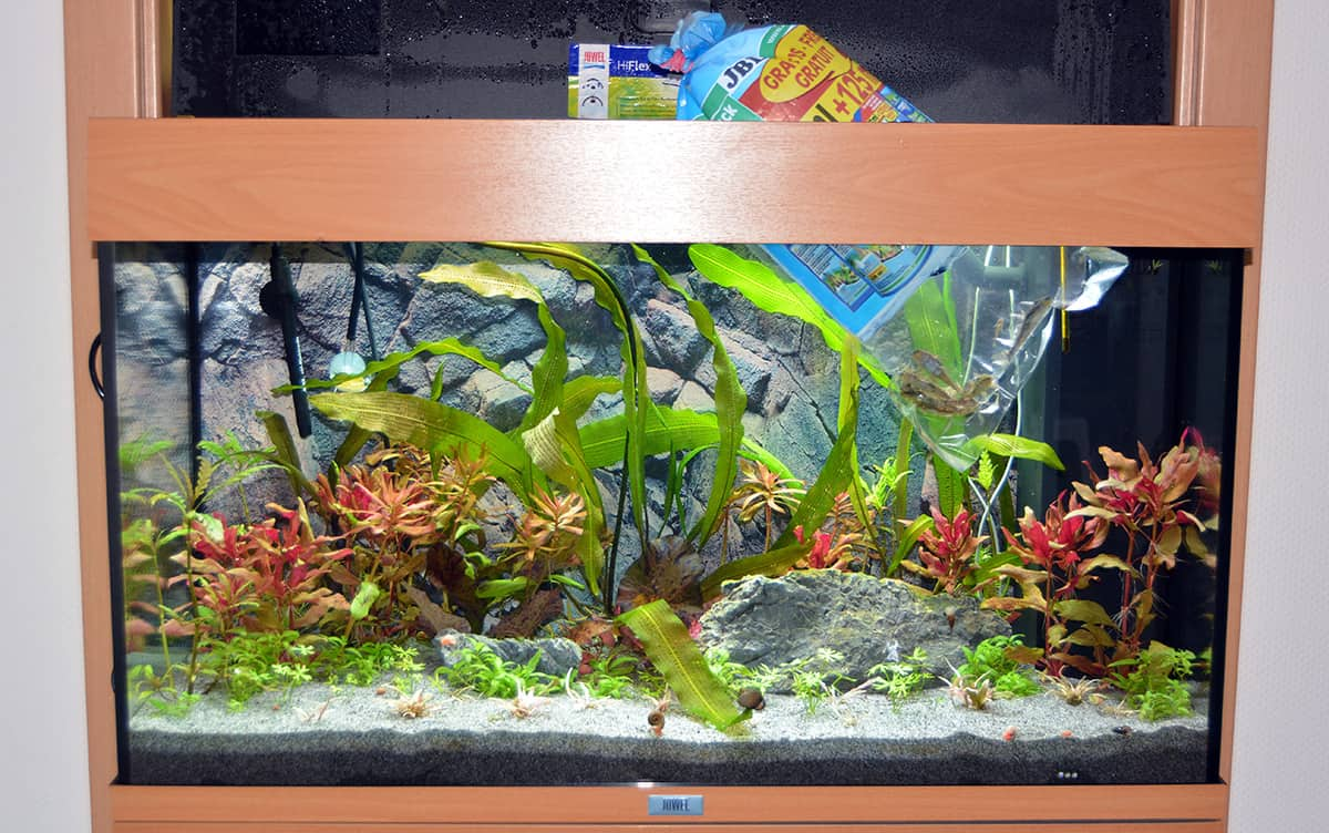 das aquarium einrichten schritt f r schritt erkl rt my fish. Black Bedroom Furniture Sets. Home Design Ideas