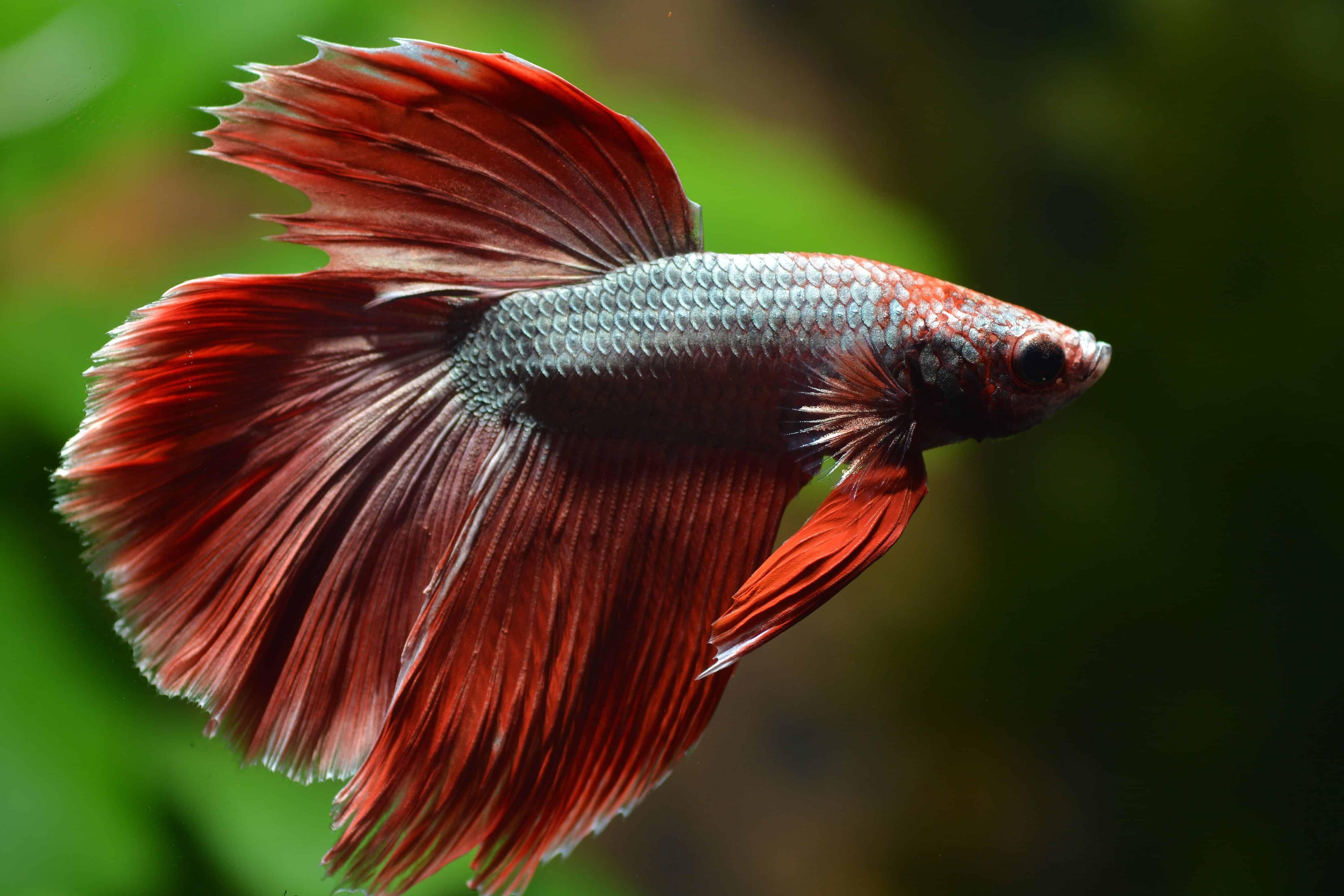 Die Bewohner deines Aquariums 1