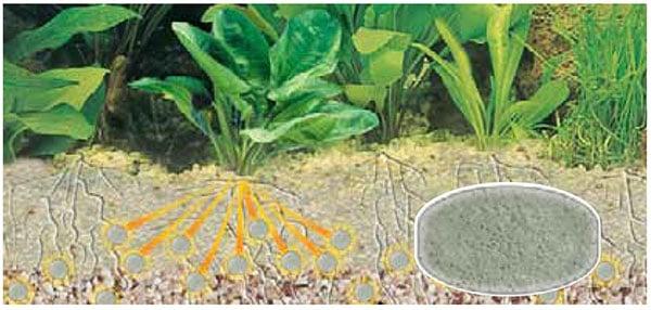 Bodengrunddünger ernährt die Pflanzen über die Wurzeln. Quelle: sera