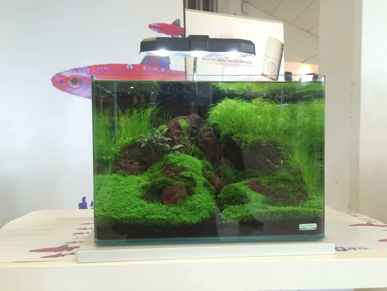 my-fish Kids - Präsentation auf der Garten- und Zooevent in Kassel 2