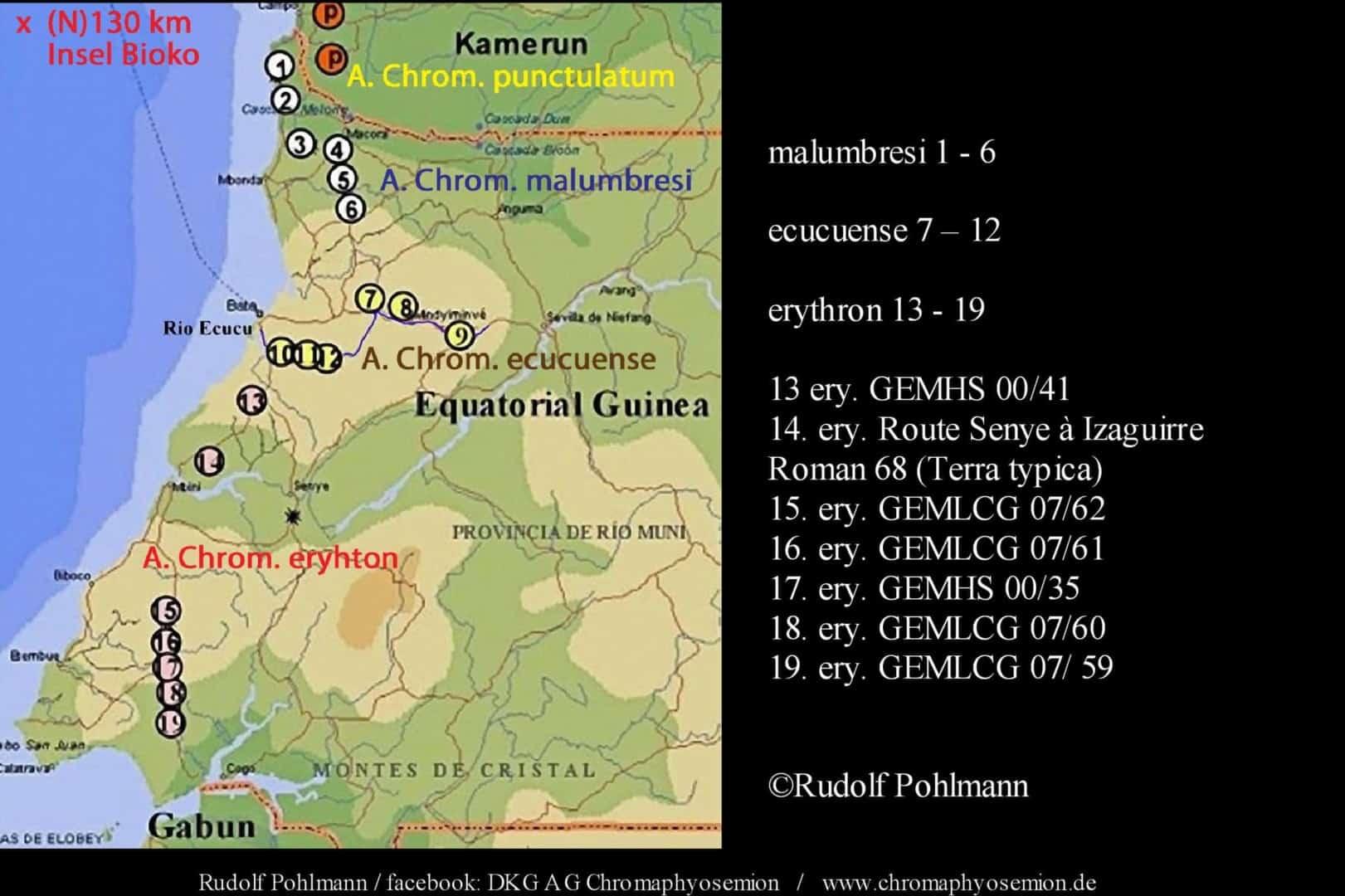 Aphyosemion (Chromaphyosemion) erythron – Erythron Zweistreifen Prachtkärpfling 1