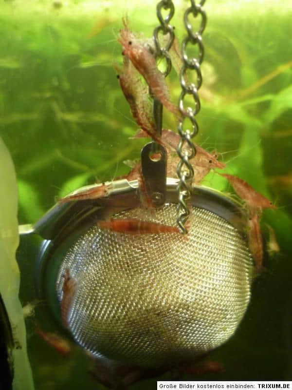 Gerstenstroh Pellets gegen Algen im Aquarium 1
