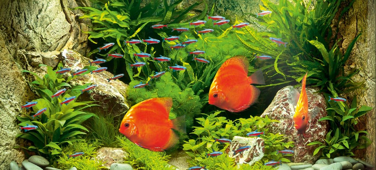Foto: FLH. - Durch geschickte Anordnung der Aquariumspflanzen können verträumte Unterwasserlandschaften entstehen.