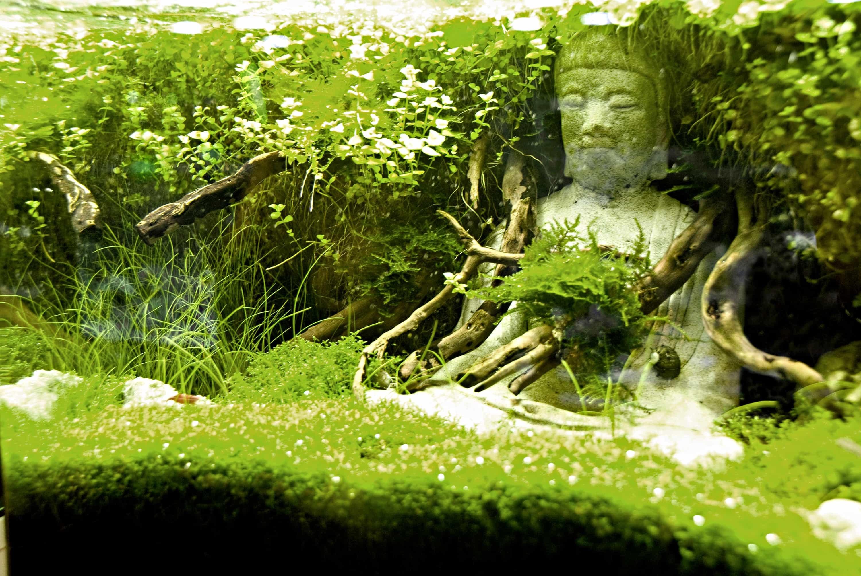 Foto: FLH. - Mit speziellen Figuren und Schmuckgegenständen aus dem Fachhandel bekommt das Aquarium eine individuelle Note.