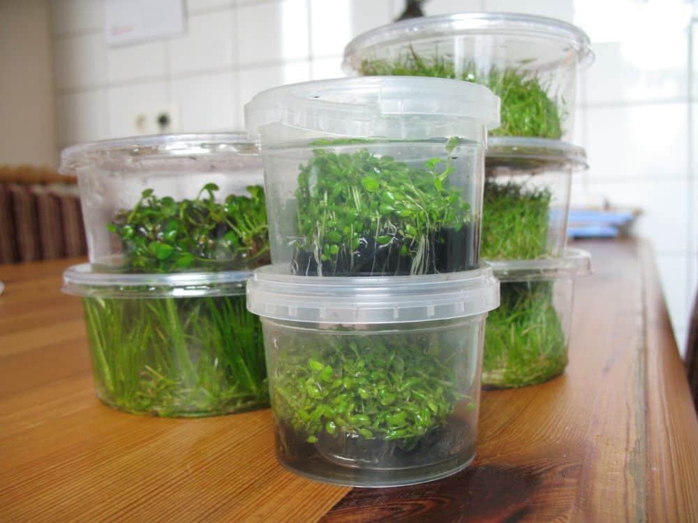 Tipps zur Pflanzenpflege - So klappt es bestimmt 2