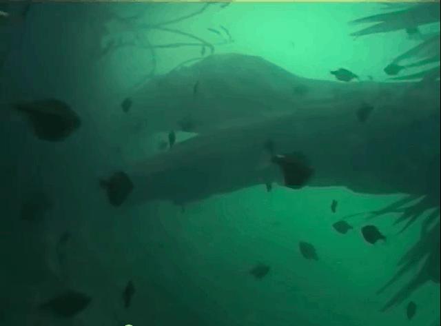 Am schwarzen Fluss - Eine spannende Fischfangexpedition zum Rio Negro kurzzeitig kostenlos 9