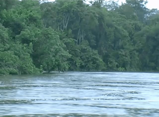 Am schwarzen Fluss - Eine spannende Fischfangexpedition zum Rio Negro kurzzeitig kostenlos 8