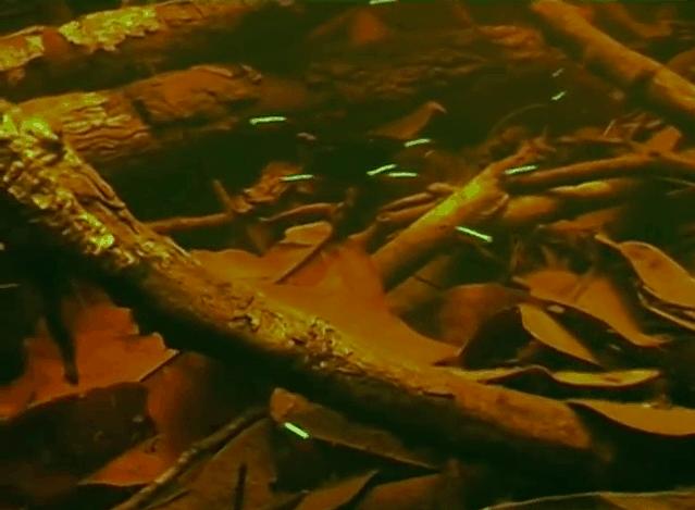 Am schwarzen Fluss - Eine spannende Fischfangexpedition zum Rio Negro kurzzeitig kostenlos 7