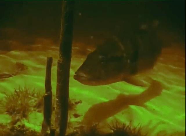 Am schwarzen Fluss - Eine spannende Fischfangexpedition zum Rio Negro kurzzeitig kostenlos 3